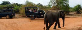 Tourism_Yala_National_Park