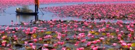 Lac lotus Udon Thani Thailande